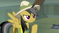 Daring Do upset S04E04
