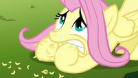 Fluttershy chewing on her hoofs S3E5