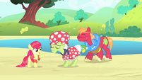 "Apple Bloom ""We'd be a cinch to win!"" S4E20"