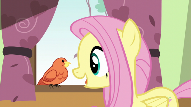 File:Fluttershy greeting Constance S6E11.png