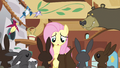 Fluttershy cute OH! S3E13.png