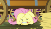 Fluttershy hiding under the hay cart S5E21