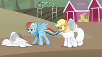 Rainbow and Applejack come up another dare S4E03