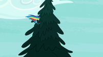 Rainbow flies into a tree S6E7