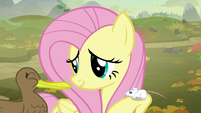 Fluttershy with a mouse and duck S5E23
