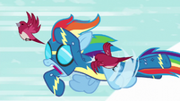 Birds angrily peck at Rainbow Dash S6E7