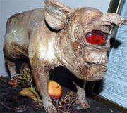 Cyclops pig