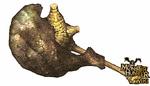 Uragaan Hammer