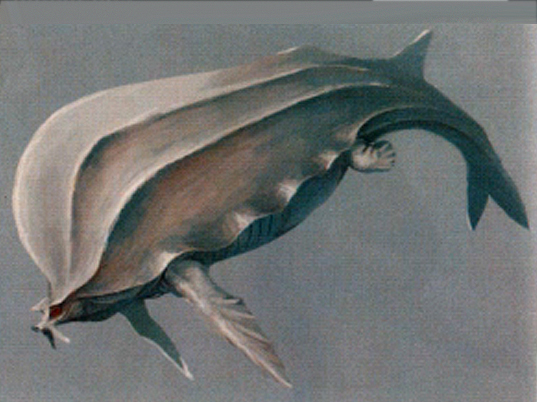 File:Concept-Whale.jpg