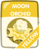 Yellow Moon Orchid