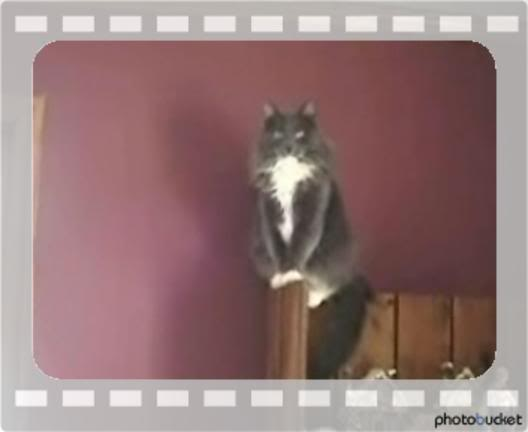 cat powers i found a reason