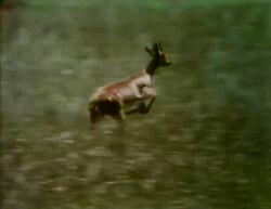 Film.Gazelle