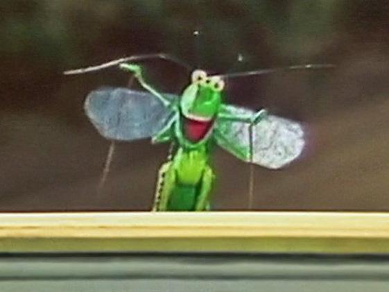 File:Grasshopper.jpg