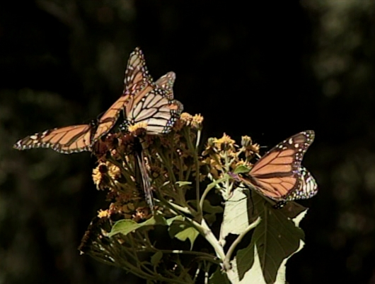 File:ButterflyForest.jpg