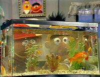 Erniebert-goldfish