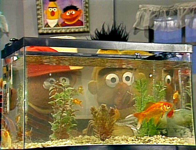 File:Erniebert-goldfish.jpg