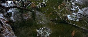 Bog of Eternal Stench 01
