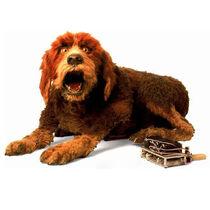 Storytellerdog-square