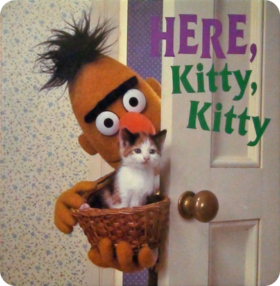 Bert Here Kitty Kitty
