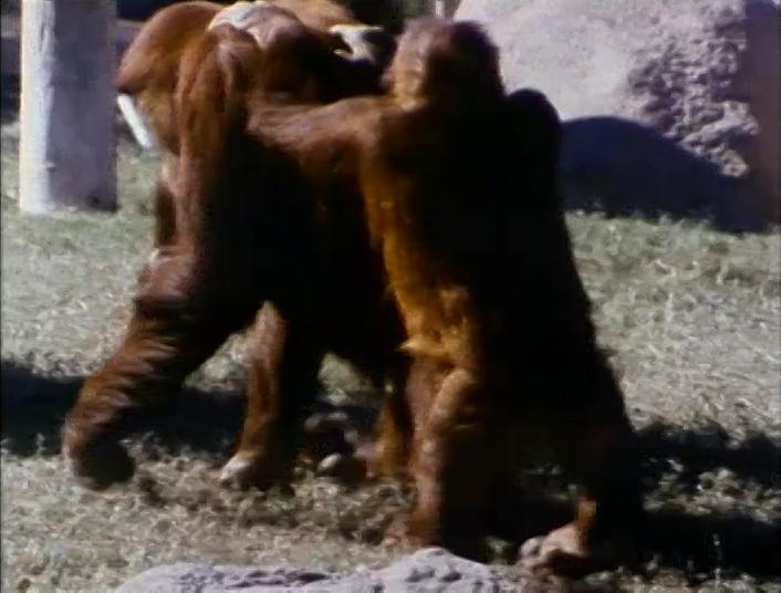 File:Orangutansfilm.jpg