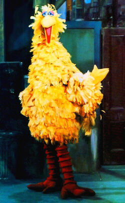 Bigbird1969