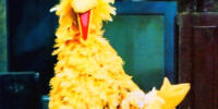 Big Bird Through the Years