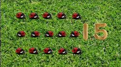 15-Ladybugs