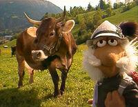 Matt cow