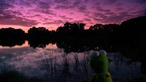 KSY-NightSwamp