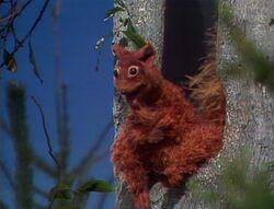 401 squirrel