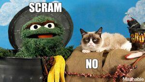 Oscar and Grouchy Cat