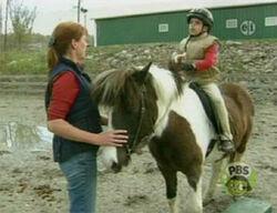 Ewhorse-film