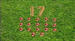 17-Mushrooms