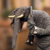 Elephant-thumb