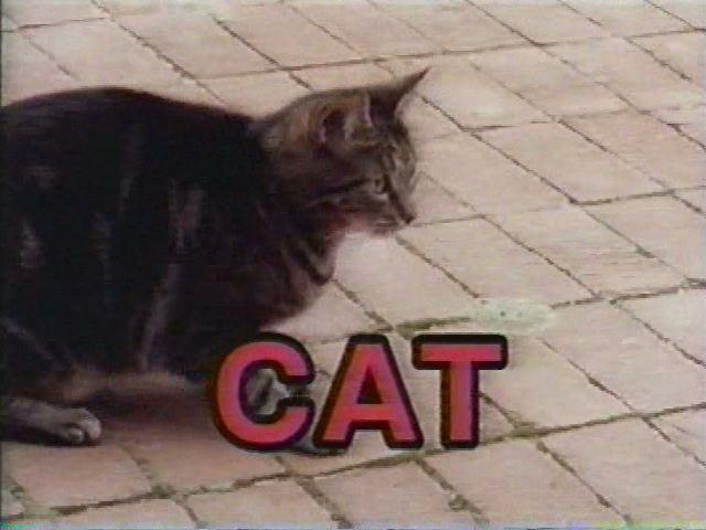 File:Cat!Cat!Cat!.jpg