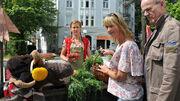 Pferdwochenmarkt101 v-original