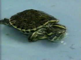 PS-Tortugas