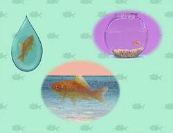 Ewfish-quiz