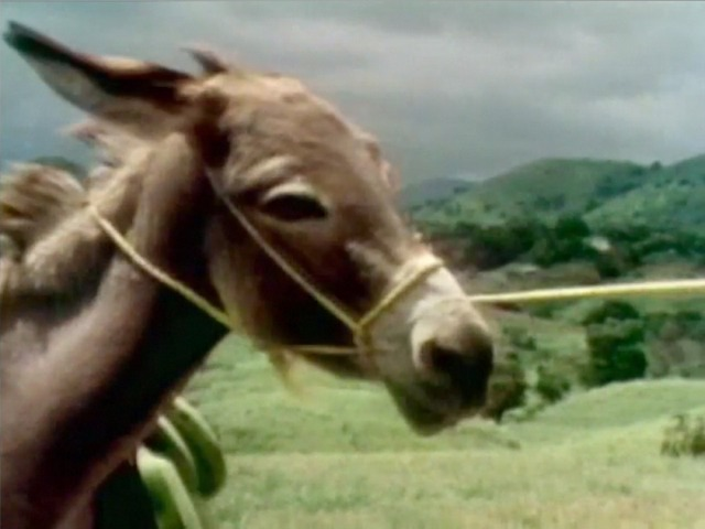 File:Film.Burro.jpg