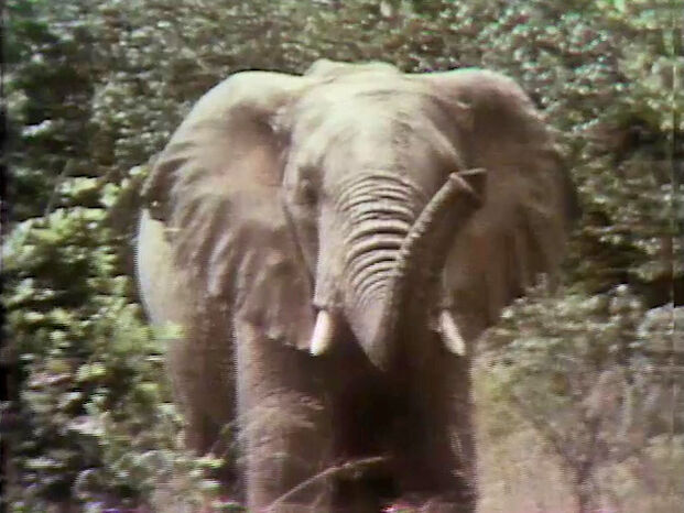 File:Elephant film.jpg