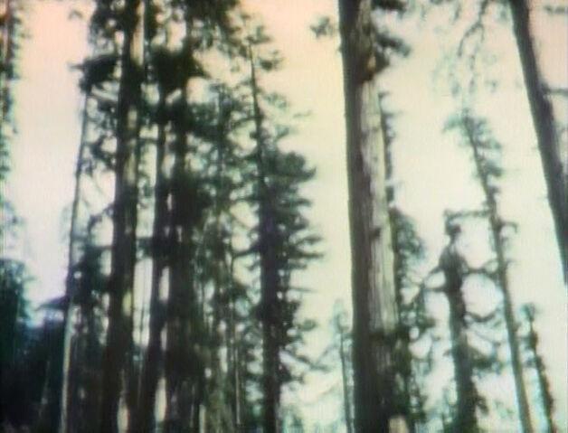 File:Timber2.jpg