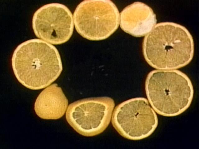 File:Oranges!!.jpg
