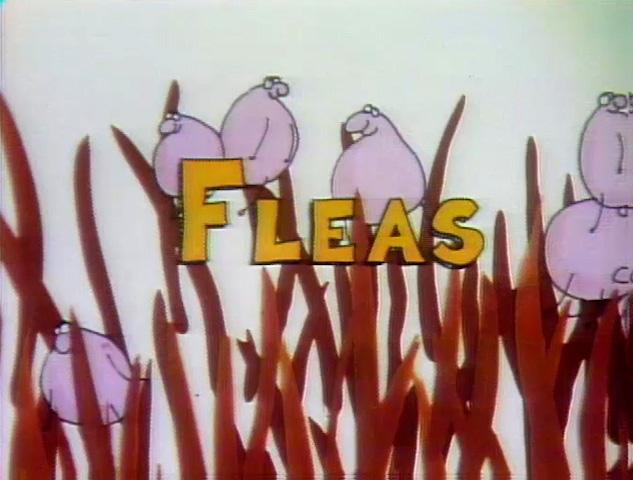 File:Fleas!.jpg