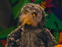 Timothy the Owl