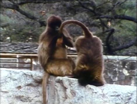 File:Film.Monkeyscleaning.jpg