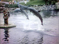 3-Dolphins