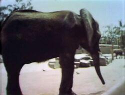 Zooelephant