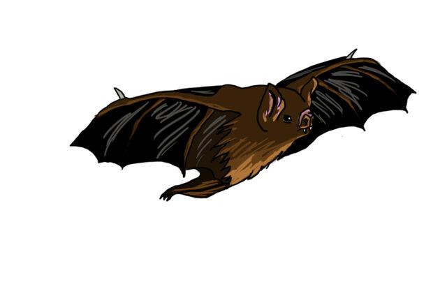 File:DraculaBat 1.jpg