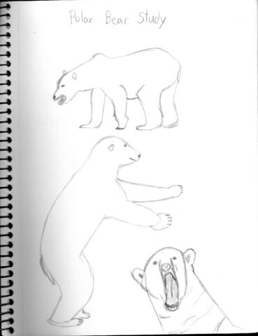 File:Polar Bear Study.jpg