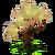 Beeyoot Tree